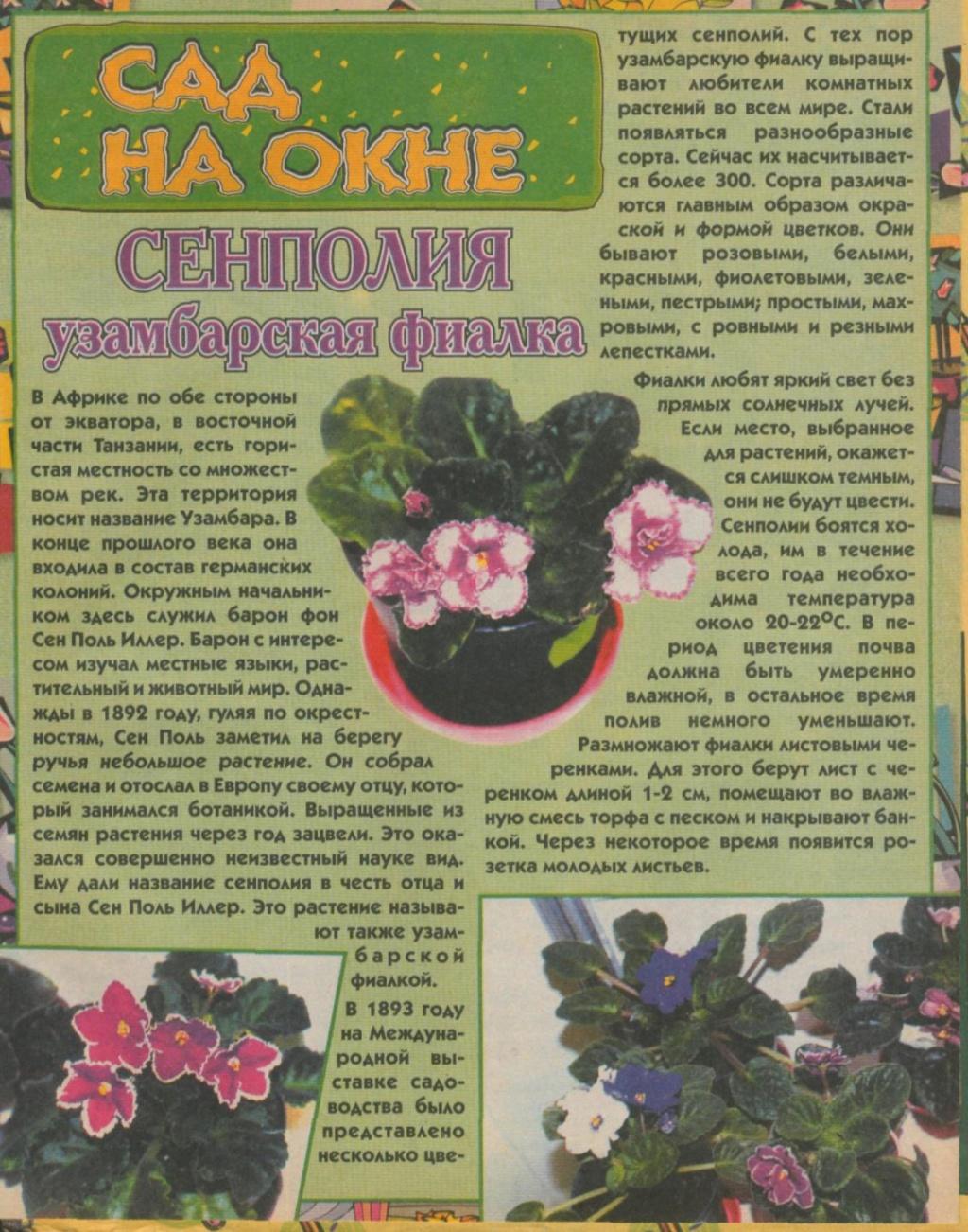 узамбарская фиалка или сенполия - Страница 2 4110