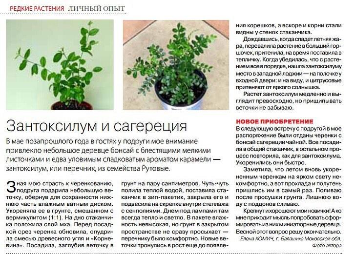 статьи о растениях из  газет и журналов - Страница 8 96008810