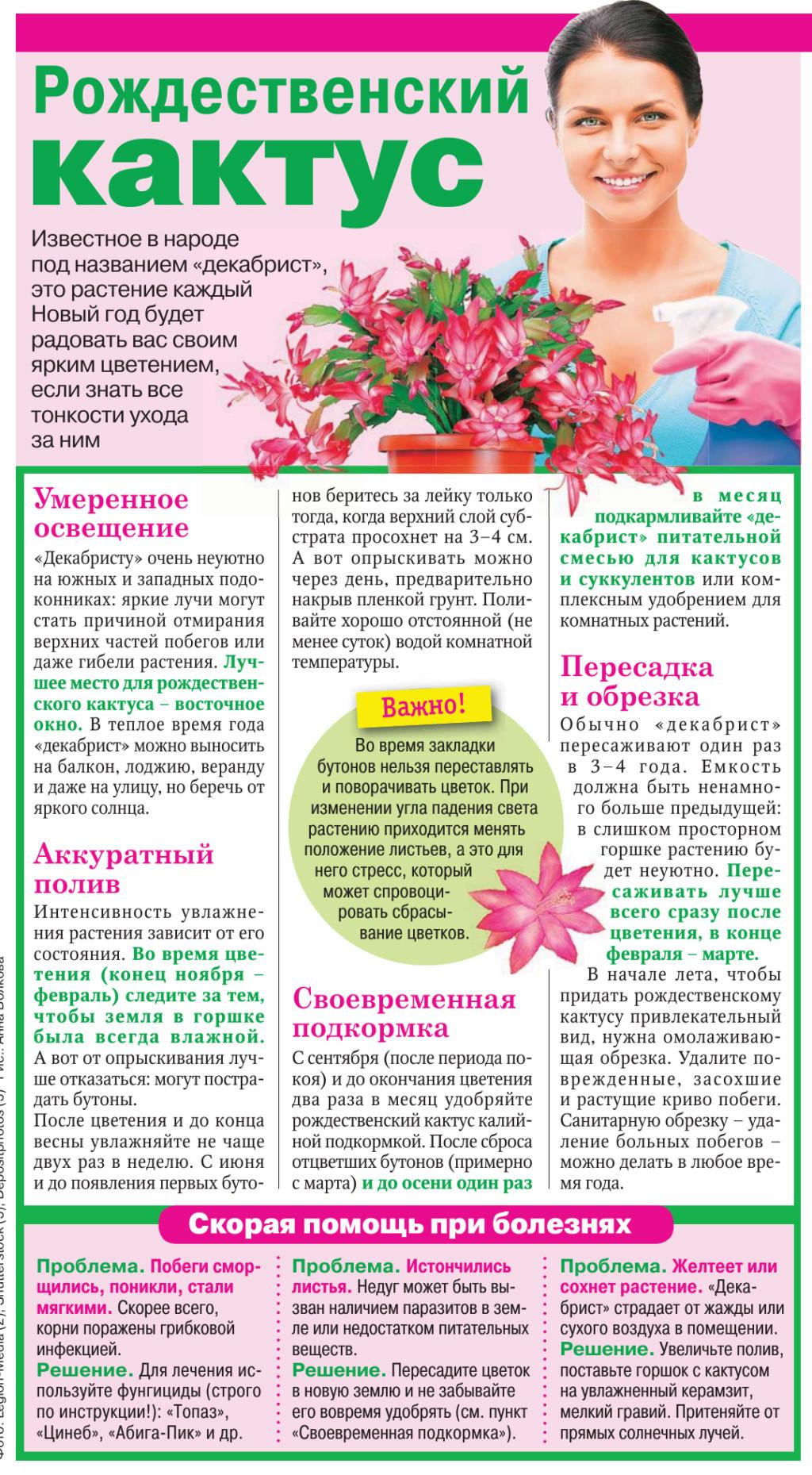 Кактусы и суккуленты - Страница 2 _51-2010