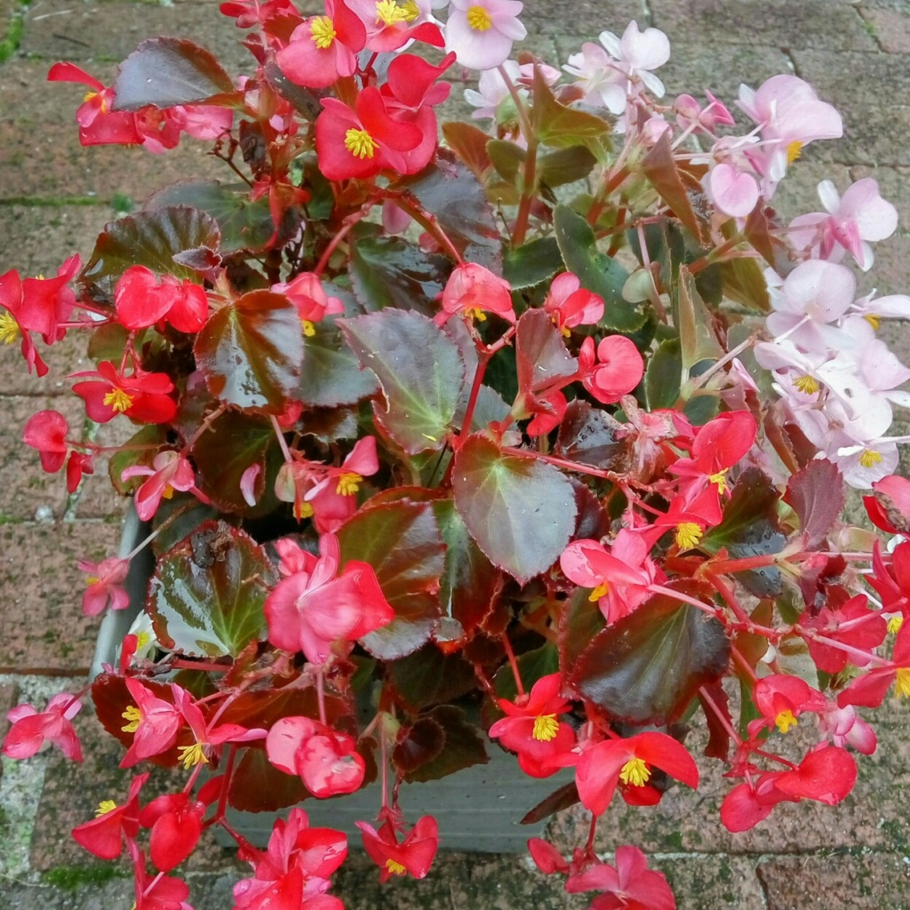 "Мои цветочки ... Занятие для души)))""  - Страница 2 _augvw10"