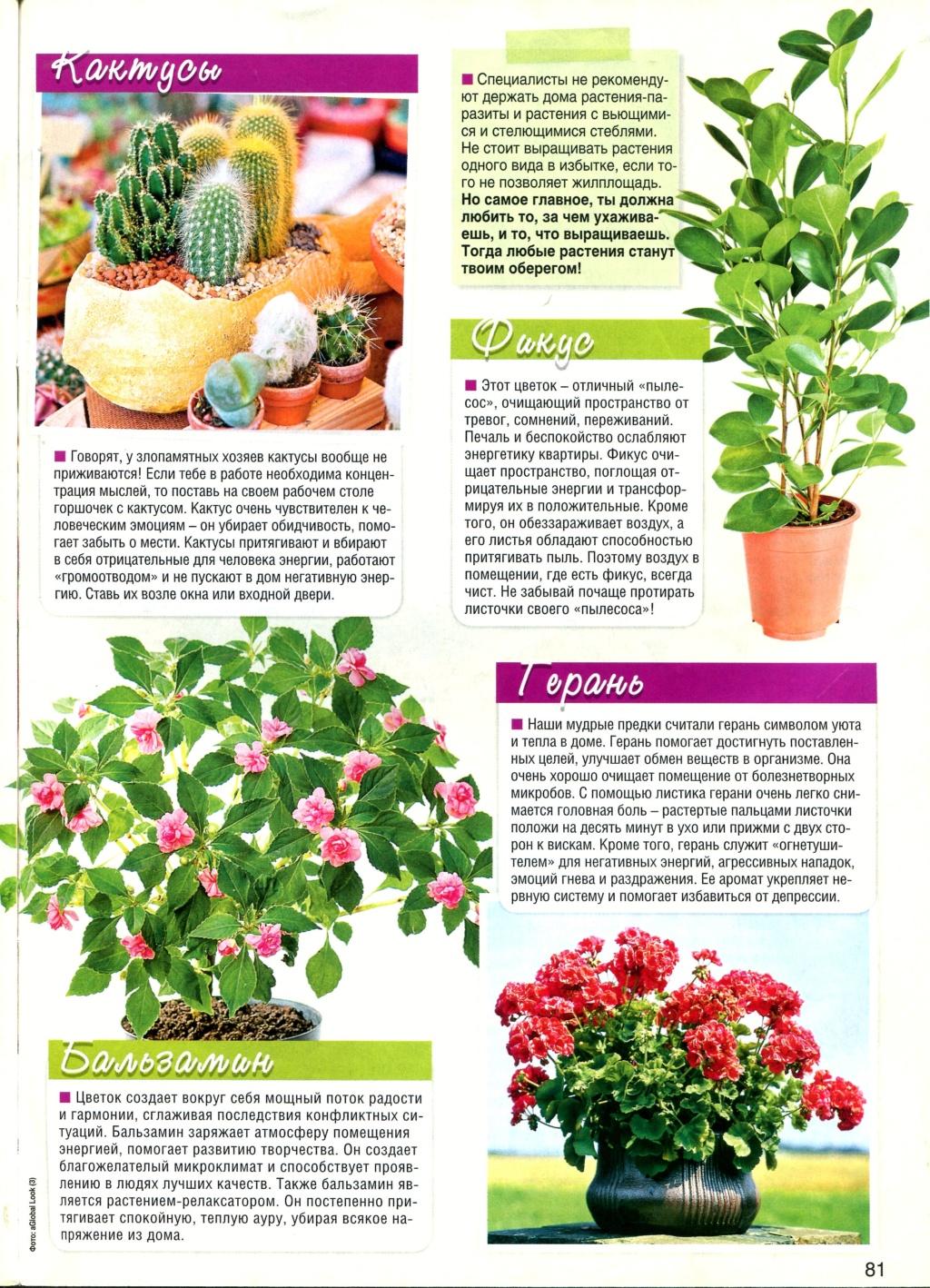 Магия растений Img36710