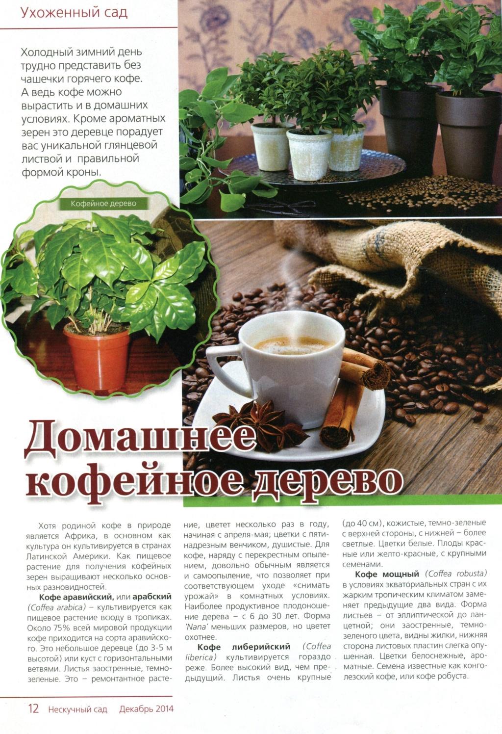 Кофейное дерево Img93910