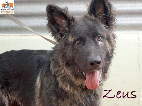 ZEUS - CROISE BERGER - ES (Sole) 36664410
