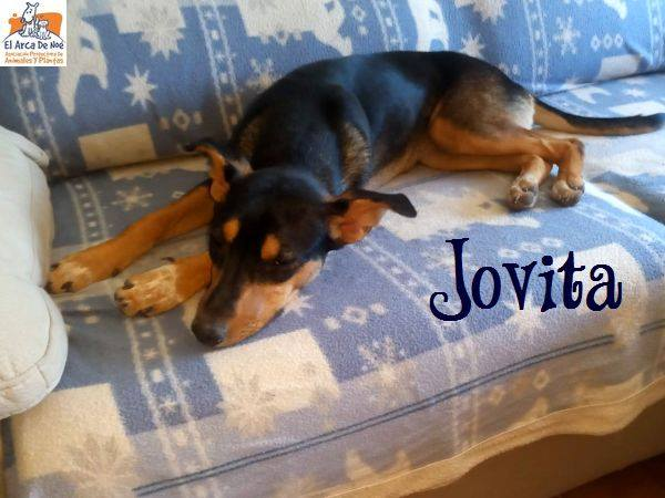 JOVITA - ES (Sole) 39441810