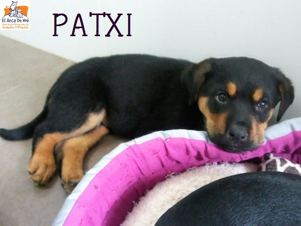 PATXI (sole) Img-2017