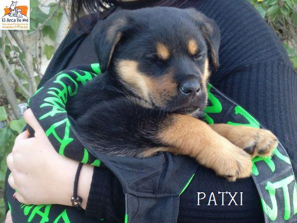 PATXI (sole) Img-2019