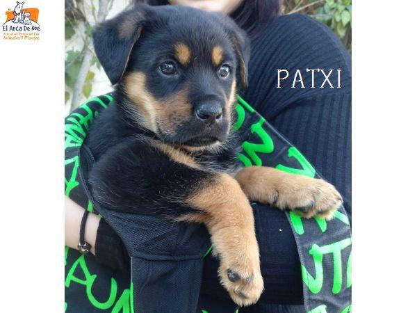 PATXI (sole) Img-2020