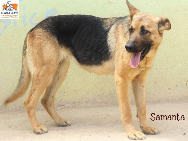 Samanta devenue Indiana (sole) Img_6710