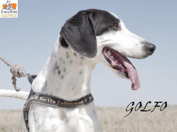 GOLFO (sole) P1805111
