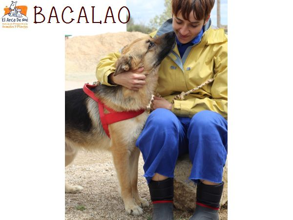 BACALAO (sole) P1808132