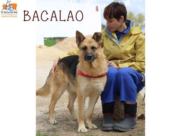 BACALAO (sole) P1808133