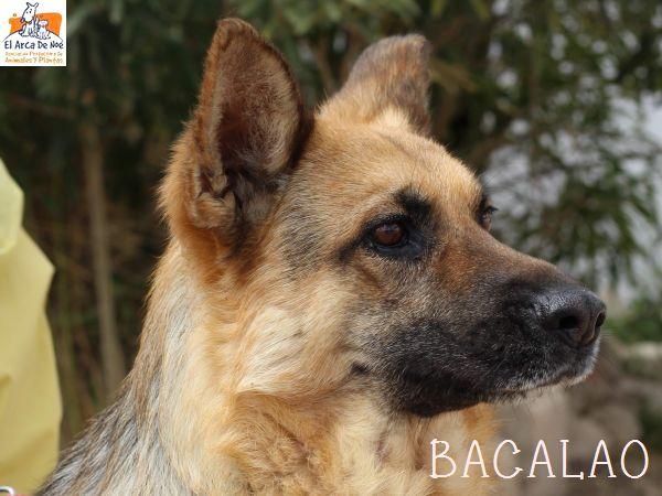 BACALAO (sole) P1808134