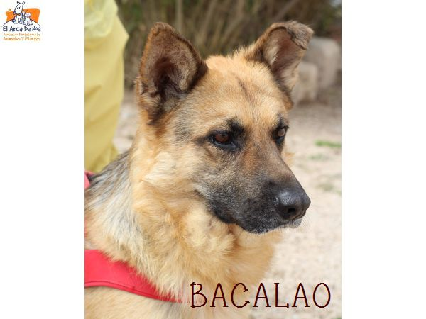BACALAO (sole) P1808135