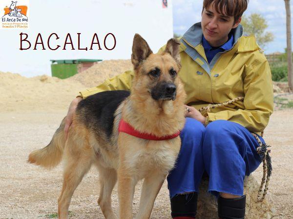 BACALAO (sole) P1808136