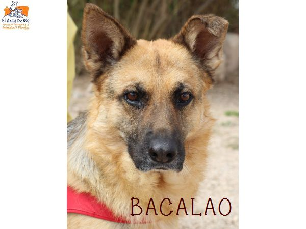 BACALAO (sole) P1808138