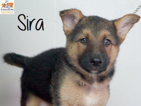 SIRA - CROISEE BERGER - ES (Sole)  P1809111