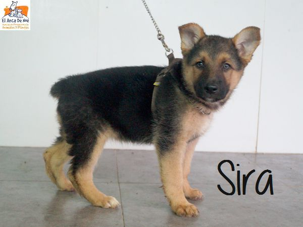SIRA - CROISEE BERGER - ES (Sole)  P1809115