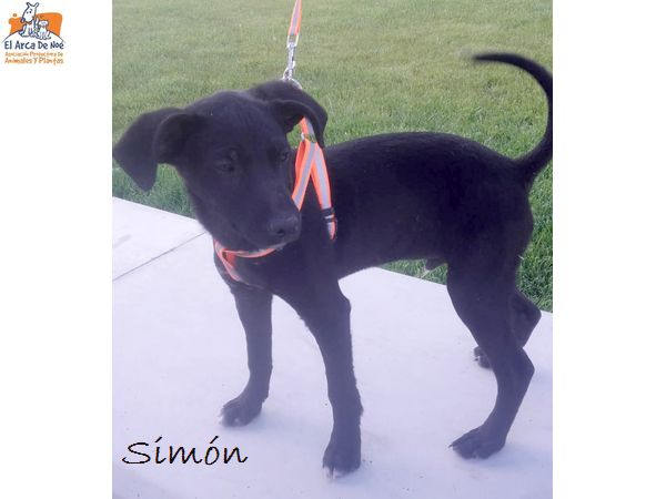 SIMON - NOIR - ES (Sole)  Simon_10