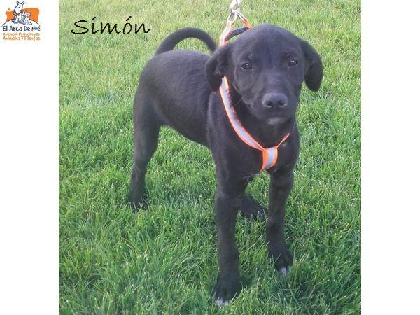 SIMON - NOIR - ES (Sole)  Simon_12