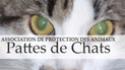 Pattes de chats (56)