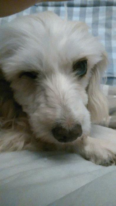 chien trouvé, état déplorable Snow_t10