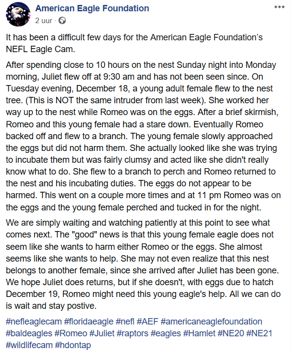 AEF Northeast Florida Nest of Bald Eagles Romeo & Juliet   - Pagina 12 2018-134