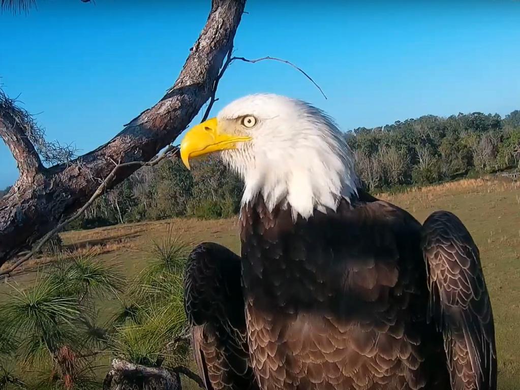 Diverse Eagle cams. - Pagina 12 2019-010