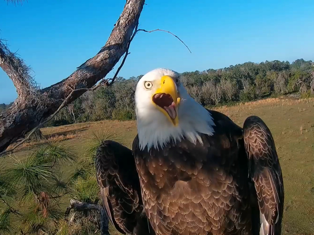 Diverse Eagle cams. - Pagina 12 2019-011