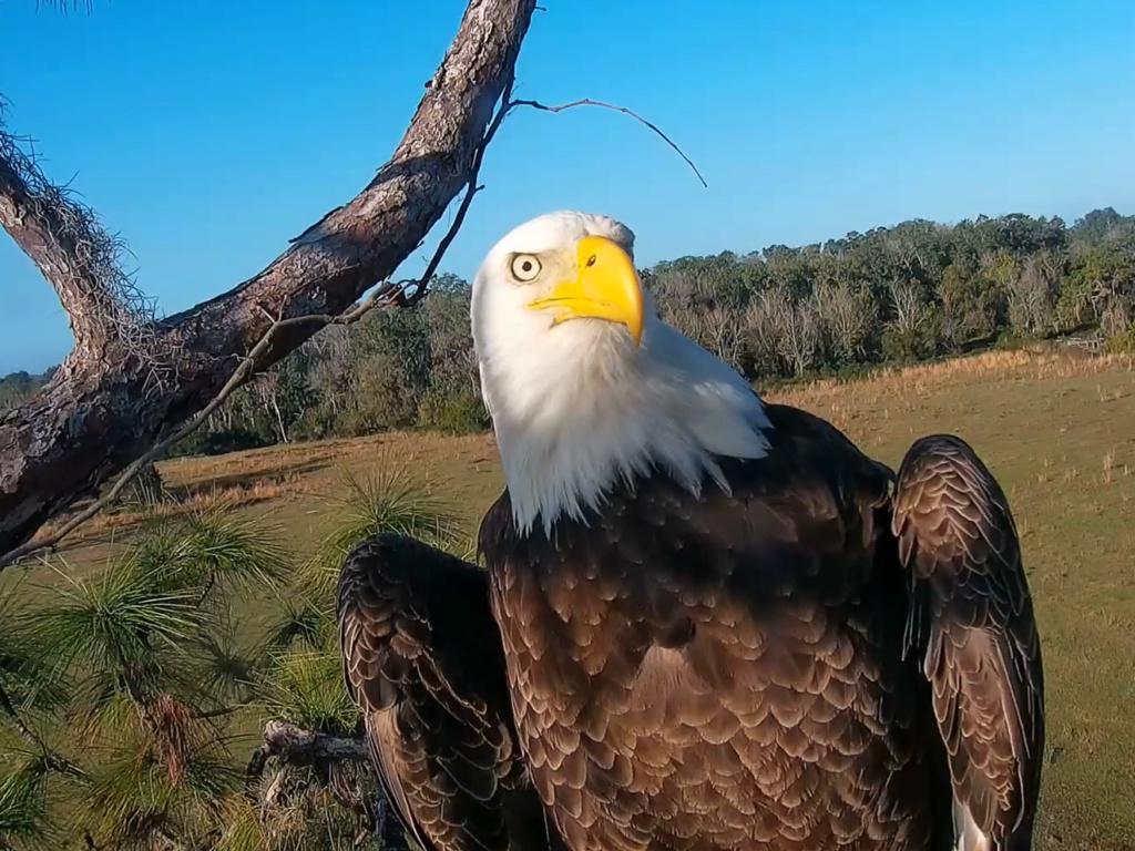 Diverse Eagle cams. - Pagina 12 2019-012