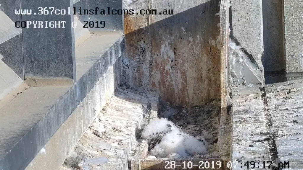Melbourne. 367 Collins Street  - Pagina 4 2019-825