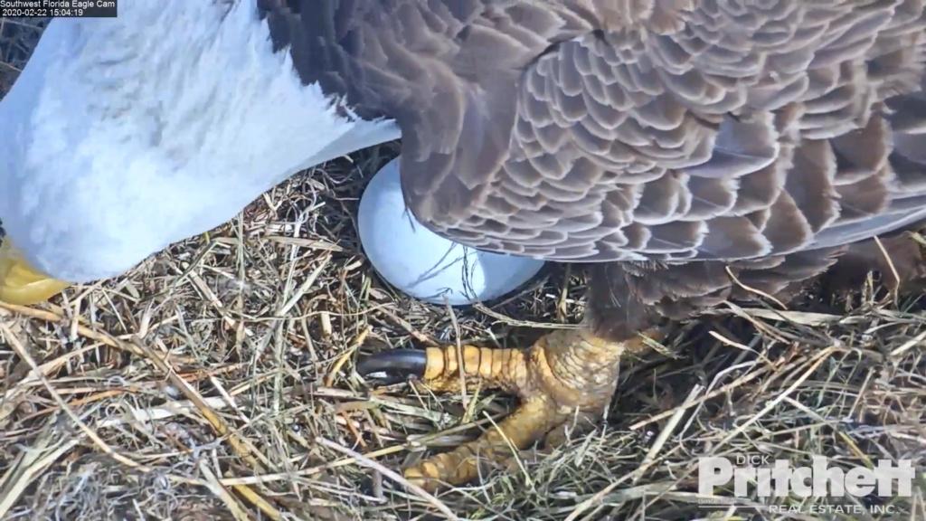 Southwest Florida Eagle Cam - Pagina 2 2020-019