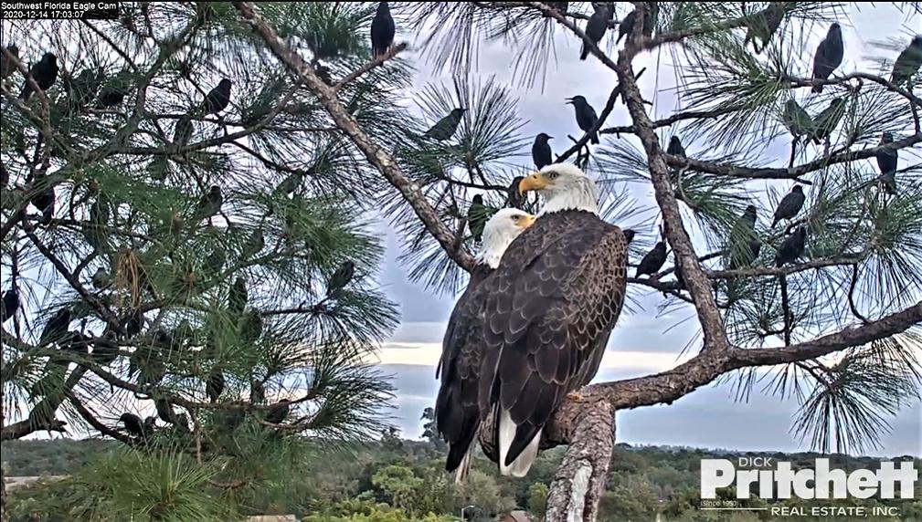Southwest Florida Eagle Cam 2020/2021. 2020-130