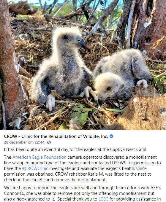 Captiva Eagle Cam Florida 2020/2021 2020-204