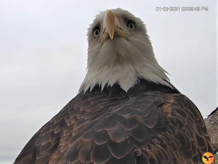 Diverse Eagle cams. - Pagina 23 2021-010