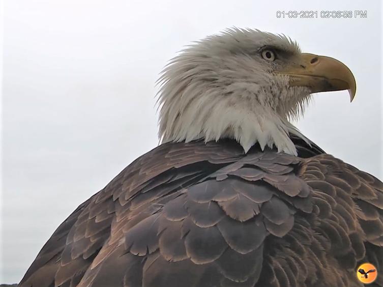 Diverse Eagle cams. - Pagina 23 2021-012