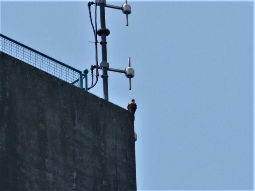 Rond om de toren - Pagina 7 P1000112