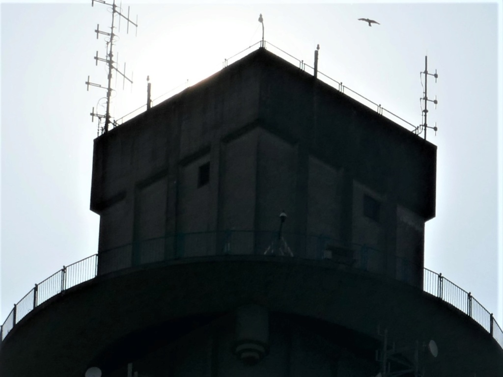 Rond om de toren - Pagina 7 P1000212
