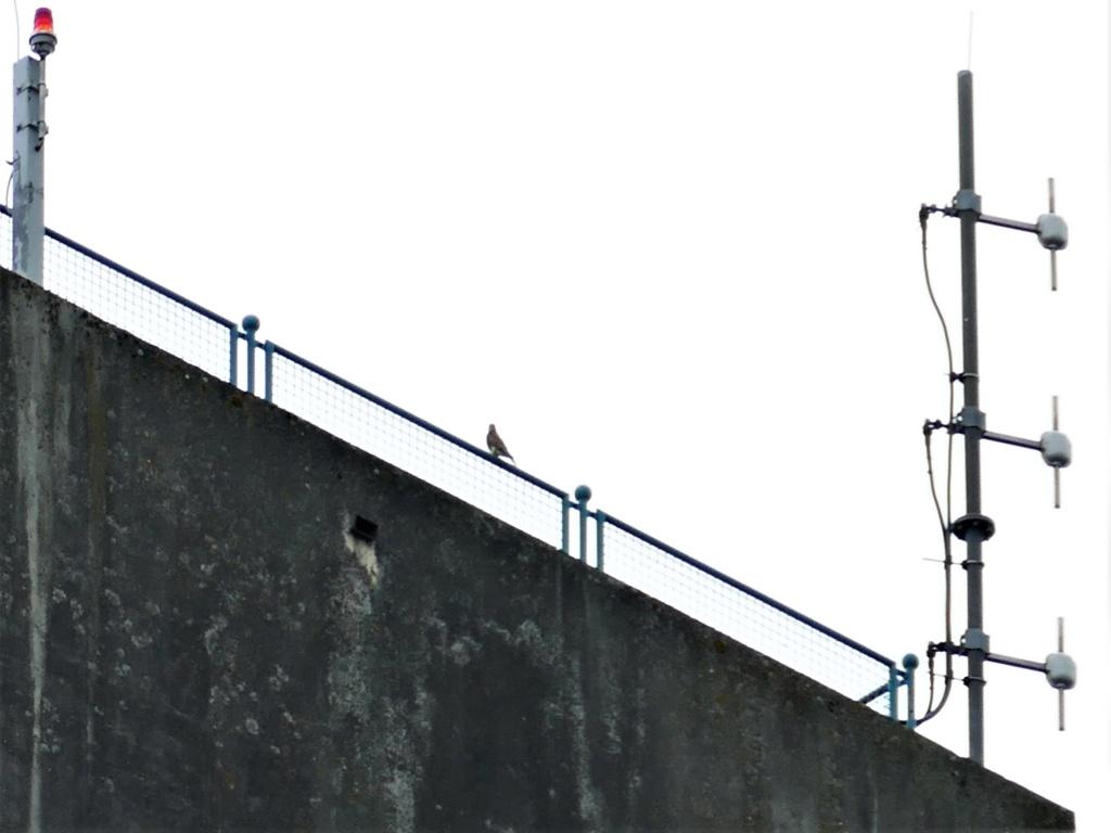Rond om de toren - Pagina 8 P1000615