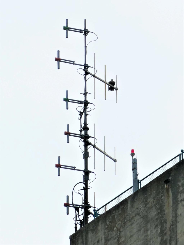 Rond om de toren - Pagina 8 P1000730