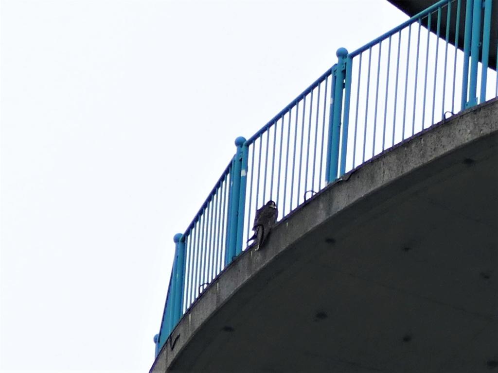 Rond om de toren - Pagina 8 P1000824