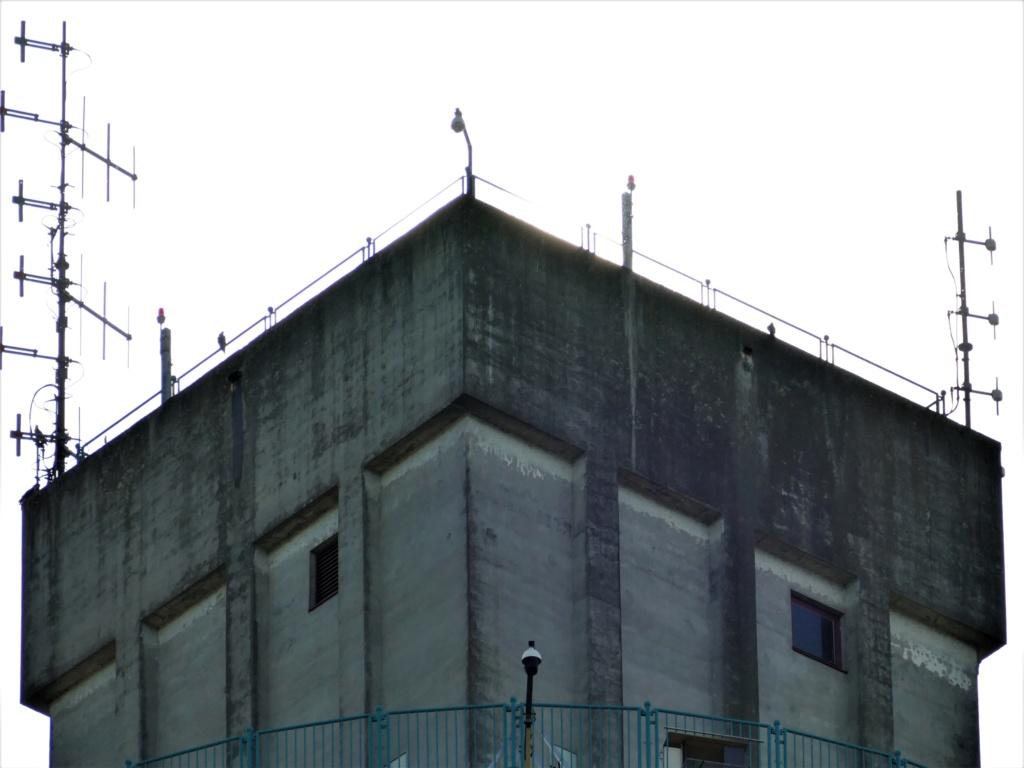 Rondom de toren - Pagina 5 P1030715