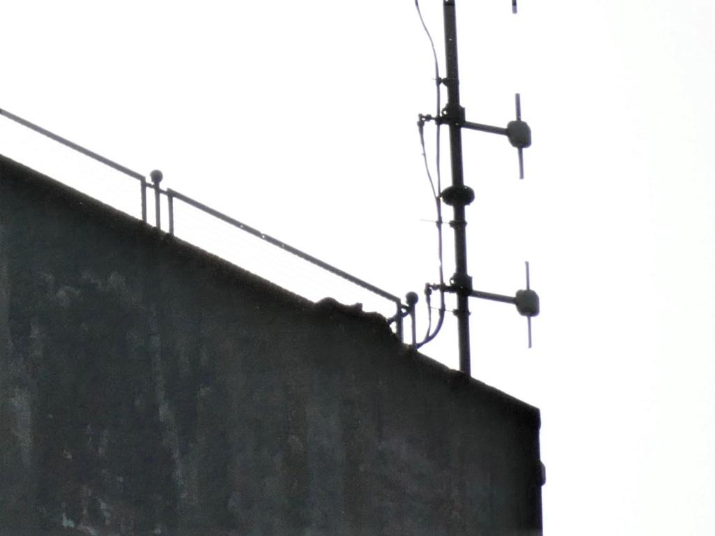 Rondom de toren - Pagina 5 P1030716