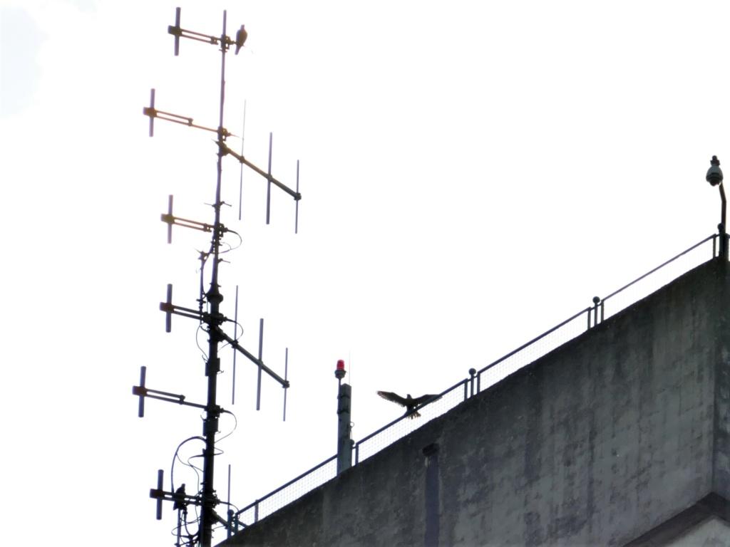 Rondom de toren - Pagina 5 P1030722