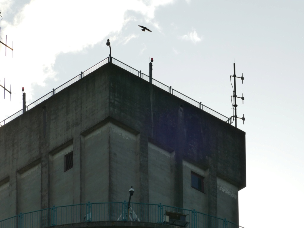 Rondom de toren - Pagina 5 P1030727