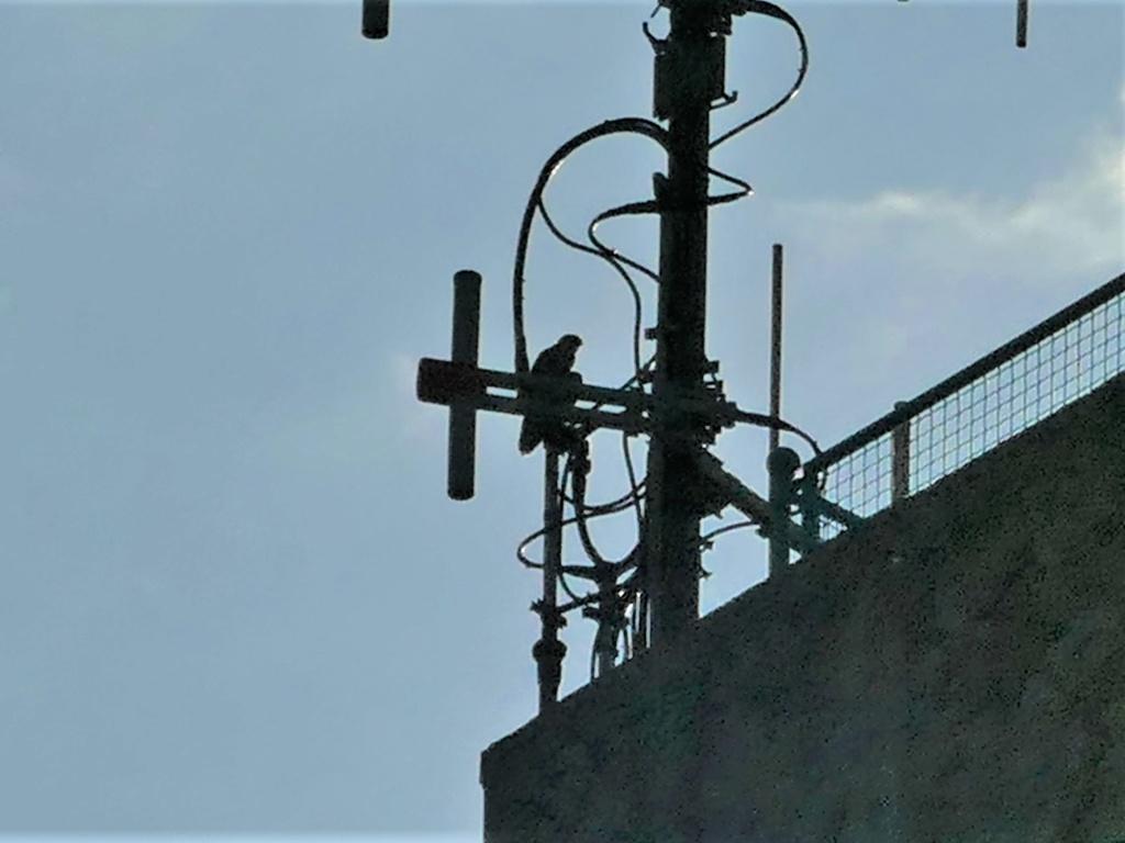 Rondom de toren - Pagina 5 P1030816