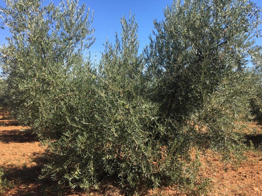 Casado análisis foliar feb-2018 Arnedo (La Rioja) - Página 2 Img_1422