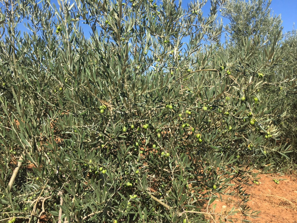 Casado análisis foliar feb-2018 Arnedo (La Rioja) - Página 2 Img_1423
