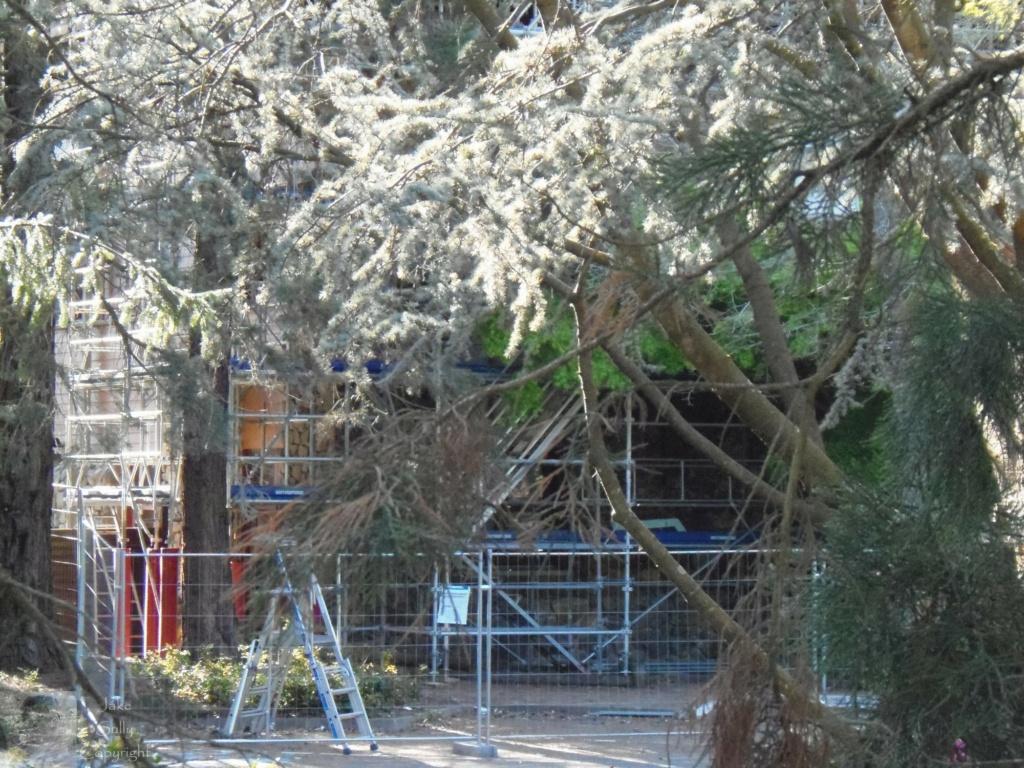 Disney's Sequoia Lodge - Rénovation - Page 2 32_cop12