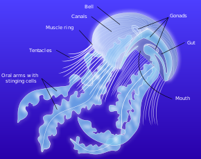 威斯康星州 •°• Wėîsï Kångxïng Zhõü •°• The Medusozoa 290px-10