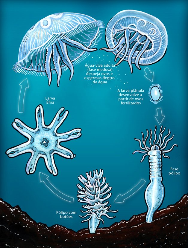 威斯康星州 •°• Wėîsï Kångxïng Zhõü •°• The Medusozoa Animal10